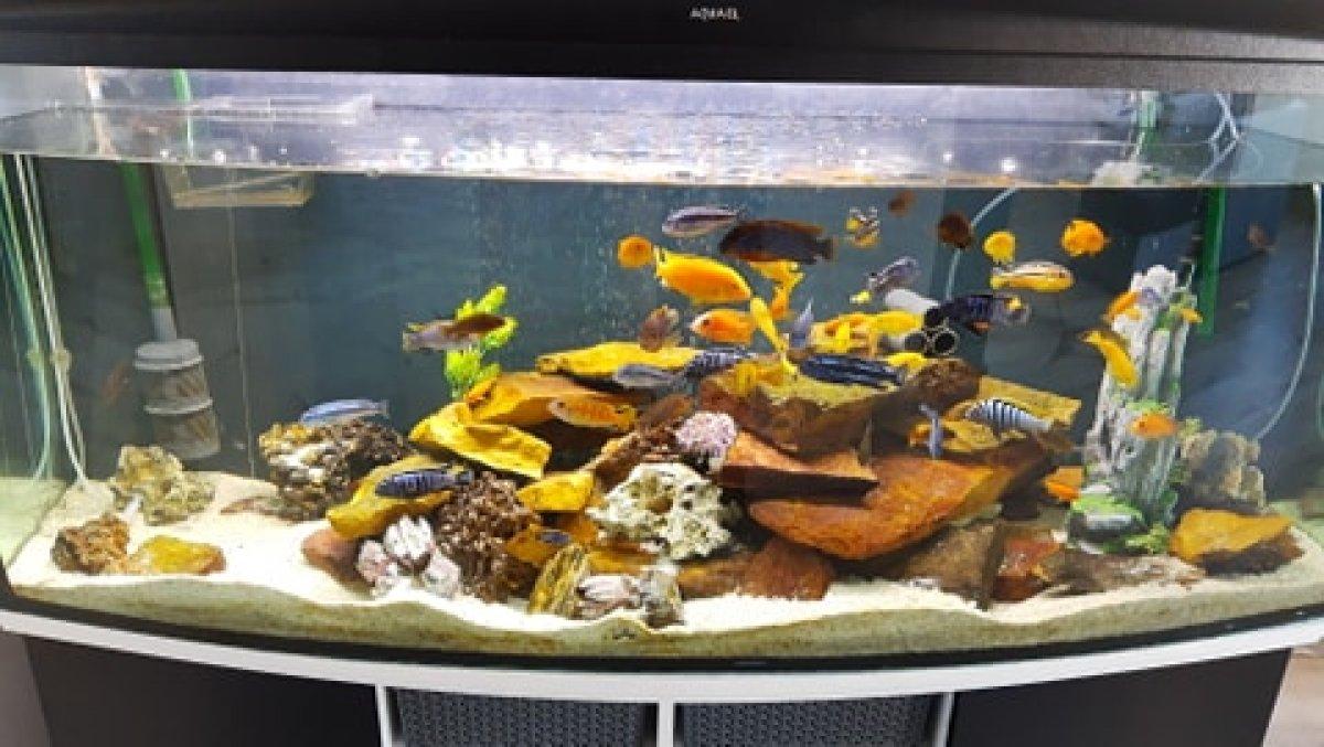 Rybki akwariowe, rybki do akwarium - pyszczaki Bełchatów - 1