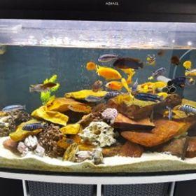 Rybki akwariowe, rybki do akwarium - pyszczaki